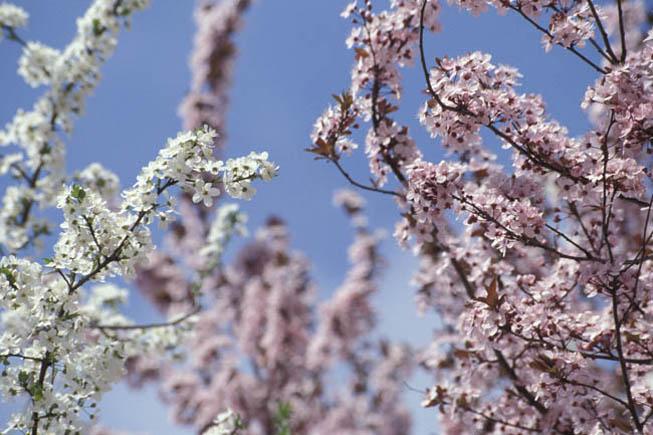 L'Eterna Primavera